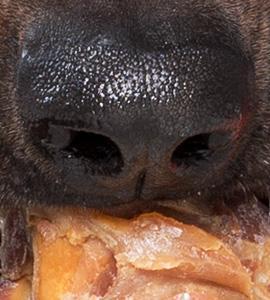 knochen hund anatomie