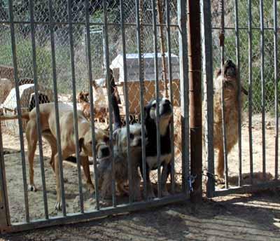 Tiere in Spanien e.V.