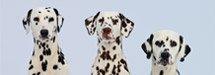 Hunde.de - News