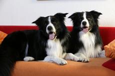 tasso-tierheim-hunde