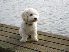 tasso-hundehalter-hund