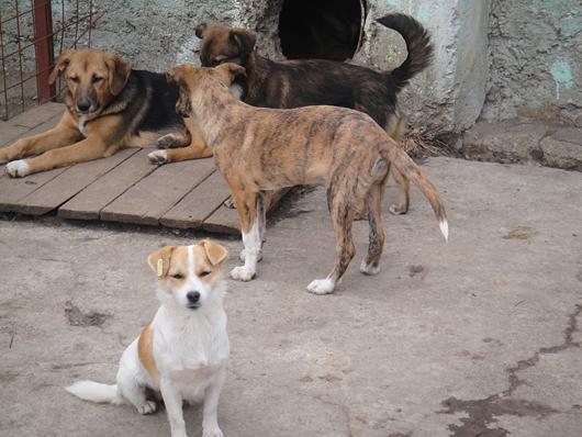 gerettete-hunde