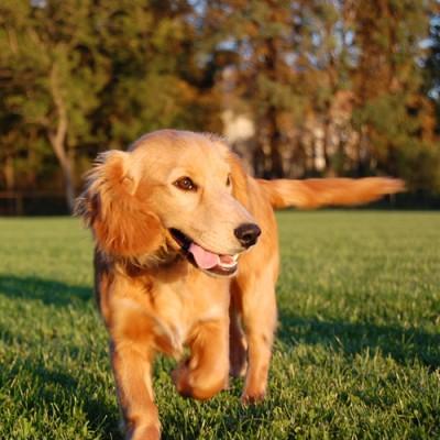 Hunde.de - Tierische Helden