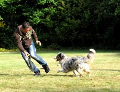 Spielmotivation Hunde