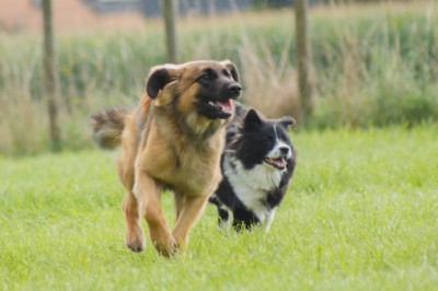 Hundetraining mit Peter Herberth