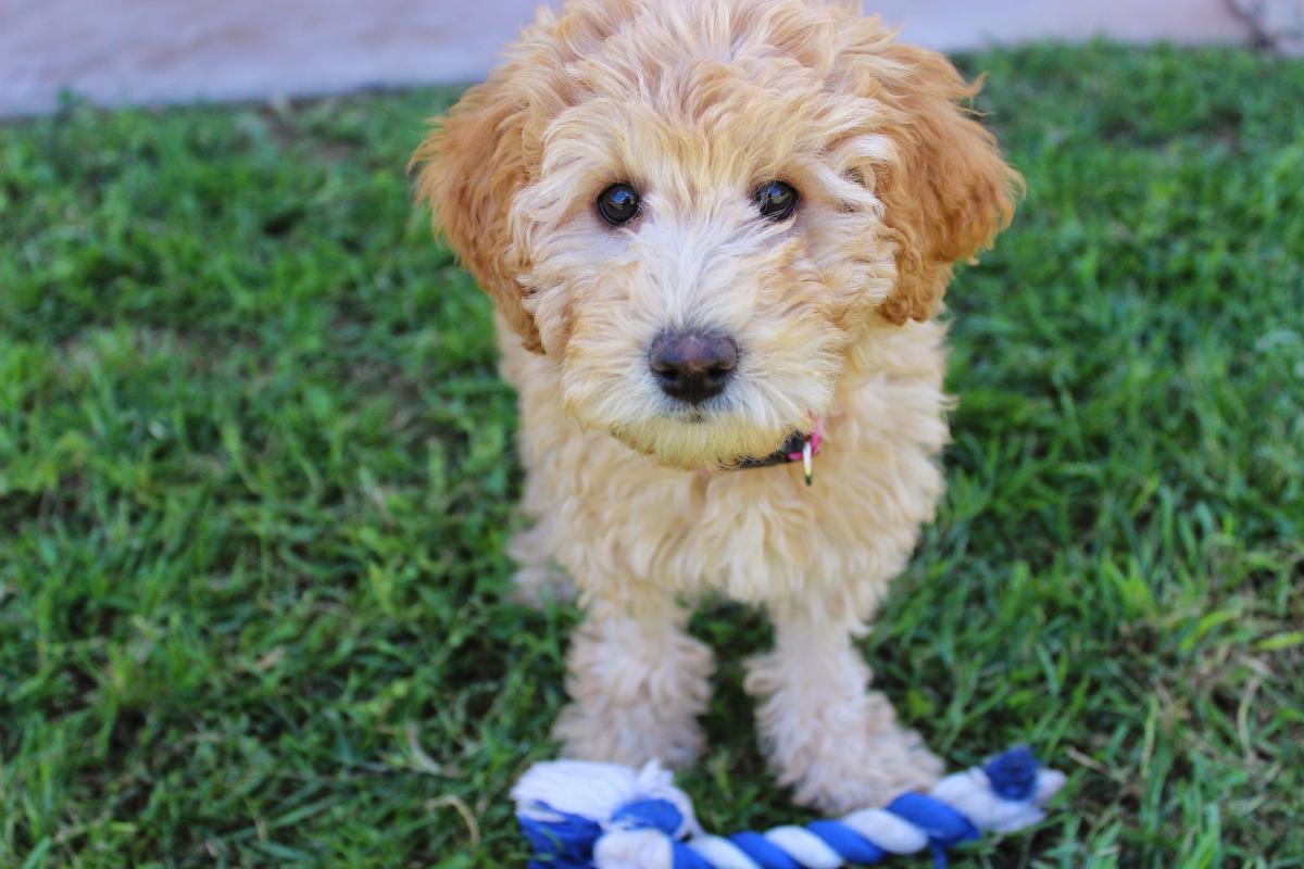 puppy-2441961_1920